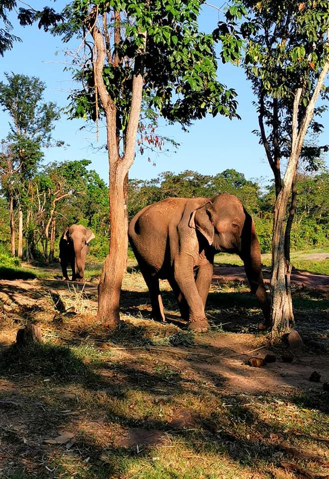 A la rencontre des éléphants en camping-car
